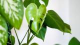 627751fe c4d6 481b b92c fa240d313403 160x90 - 観葉植物 CADデータ、植木・低木・autocad