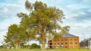 afc50521 c2e2 4fc7 bf5b c7b2e579bfb6 320x180 - 樹木・植栽の平面・立面、CADデータのもの凄く便利な探し方
