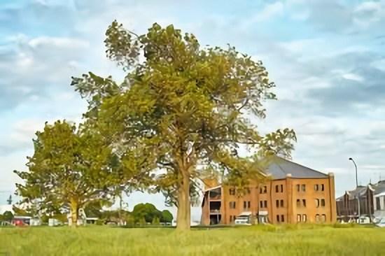 afc50521 c2e2 4fc7 bf5b c7b2e579bfb6 - 樹木・植栽の平面・立面、CADデータのもの凄く便利な探し方